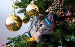 Кошка, спрятавшаяся в елке