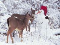 Косули и снеговик