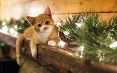 Котенок и елочные украшения