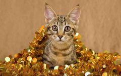Котенок в новогодней мишуре