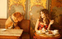 Бордоский дог и девушка