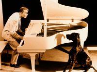 Пианист и немецкий дог