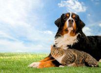 Зенненхунд и кошка