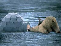 Белый медведь, фото обои для рабочего стола,