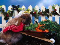 Кролик на огороде