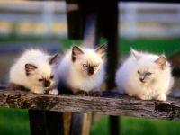 Котята на скамеечке