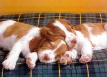Спящие щенки щенята