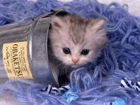 Котенок в стакане