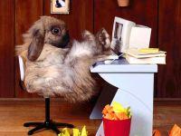 Кролик за компьютером