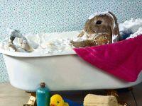 Кролик моется в ванне