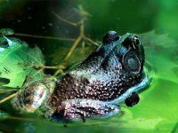 Лягушка сидит в воде