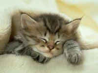 Спящий котенок, фото обои фотография