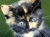Черно-белый котенок, , фото обои,