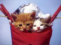Котята в сумке