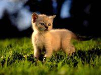 Котенок гуляет по травке