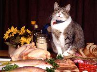Кошка около еды