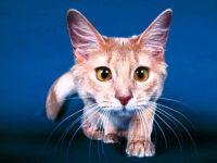 Любопытная кошка