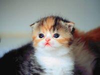 Симпатичный котенок
