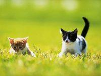 Котята гуляют по траве