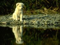 Белый щенок около воды