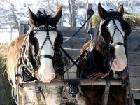 Лошади запряженные в повозку
