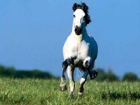 Бегущая навстречу белая лошадь