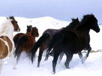 Лошади бегут по снегу