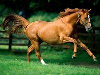 Взнузданная лошадь