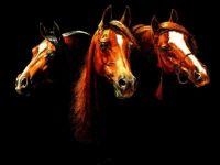 Три лошади