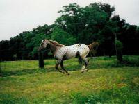 Лошадь бежит по лугу