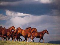 Бегущие лошади на фоне голубого неба