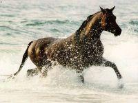 Лошадь, бегущая по воде