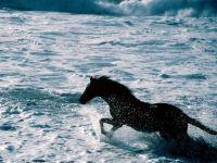 Лошадь, бегущая по волнам