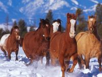 Бегущие по снегу лошади