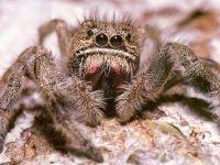 Глаза паука фото