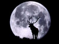 Олень на фоне полной луны