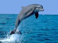 Выпрыгивающий из воды дельфин