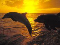 Дельфины, выпрыгивающие из воды