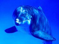Улыбающийся дельфин