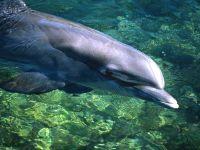 Дельфин на мелководье,