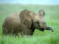 Слоненок в траве