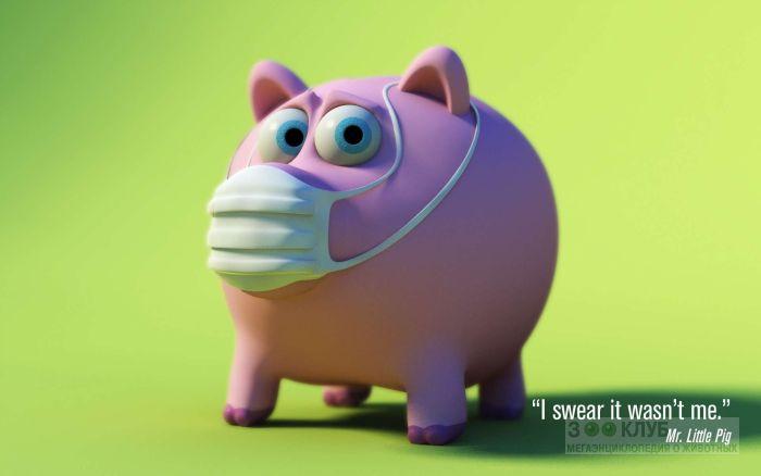 Свинья в защитной маске, обои фото фотография картинка
