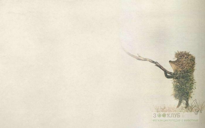 Ежик в тумане, рисунок фотография картинка обои