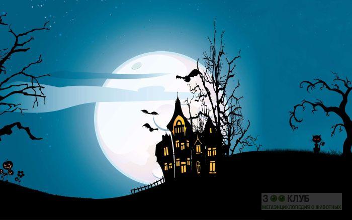 С праздником хэллоуин!, рисунок картинка обои