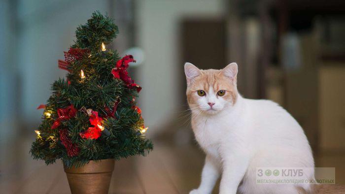 Кошка и новогодняя елка, фото фотография картинка обои