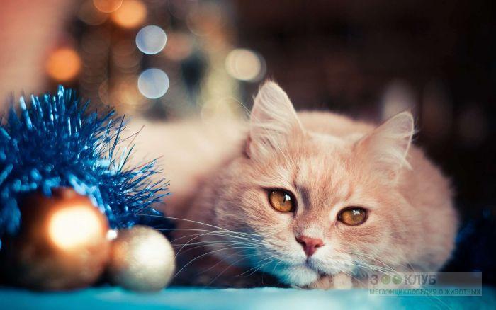 Рыжая кошка фото, фото фотография картинка обои