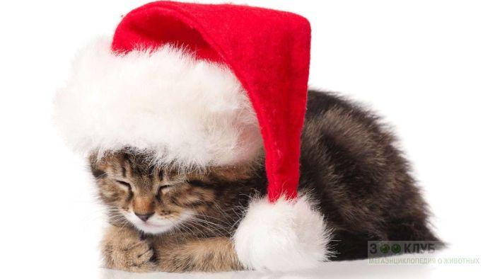 Спящий котенок фото, фото фотография картинка обои