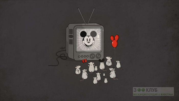 Мыши - фанаты Мики Мауса, рисунок картинка обои