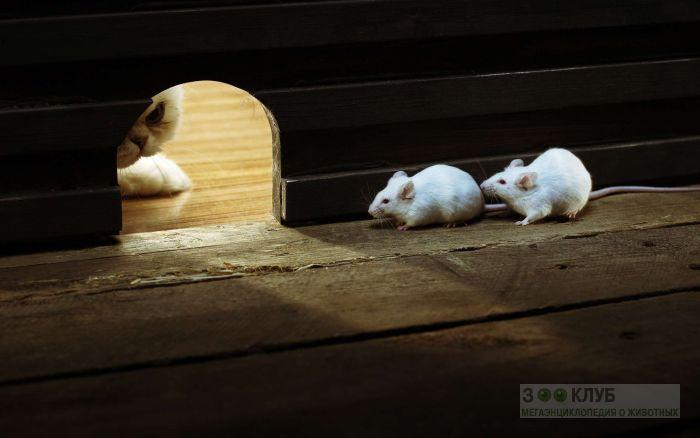 Кот и мыши фото, фото фотография картинка обои