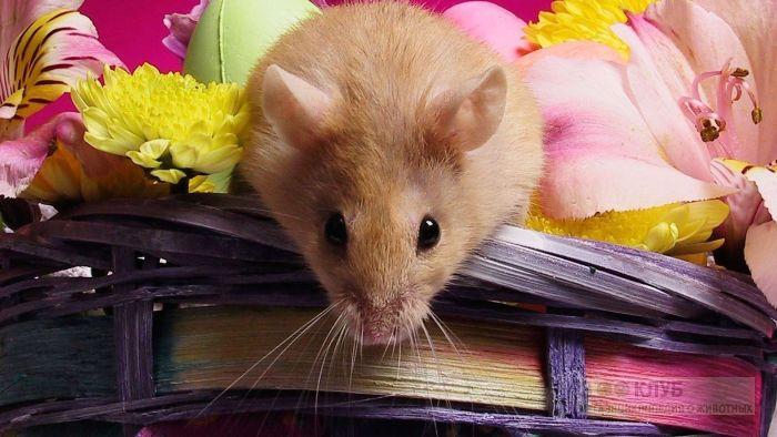 Мышка и цветы обои, фото фотография картинка обои